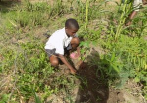 23 pupil treeplanting