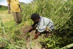 24 tree planting