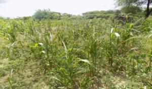 6 crops