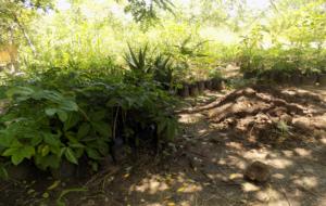 MOET against deforestation 2_seedlings