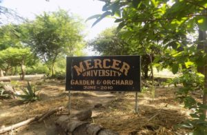 Orchard 1